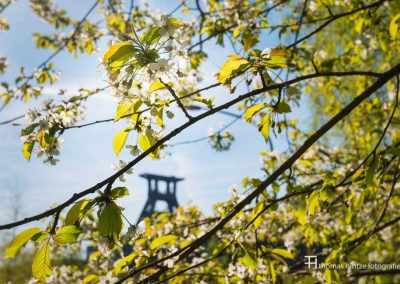 urban-nature-zollverein-0008