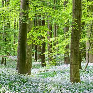 Wälder / Bäume