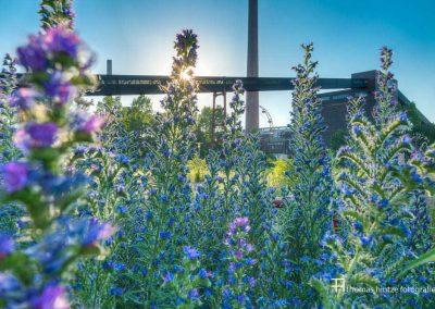 urban-nature-zollverein-0004