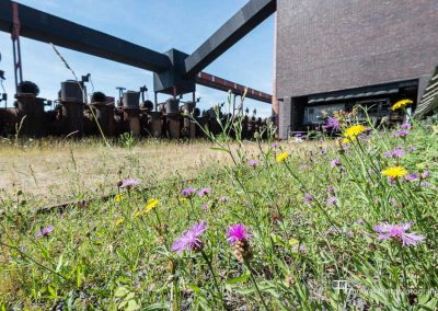 urban-nature-zollverein-0006