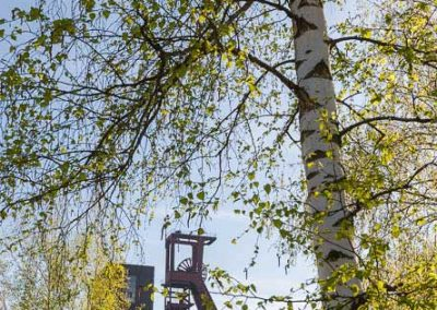 urban-nature-zollverein-0009